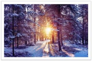 Зіма ў лесе
